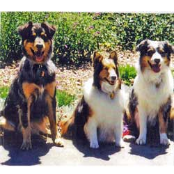 Shalie (center) with Smokey (left) and Charley (right)